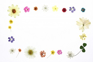 押し花のフレーム